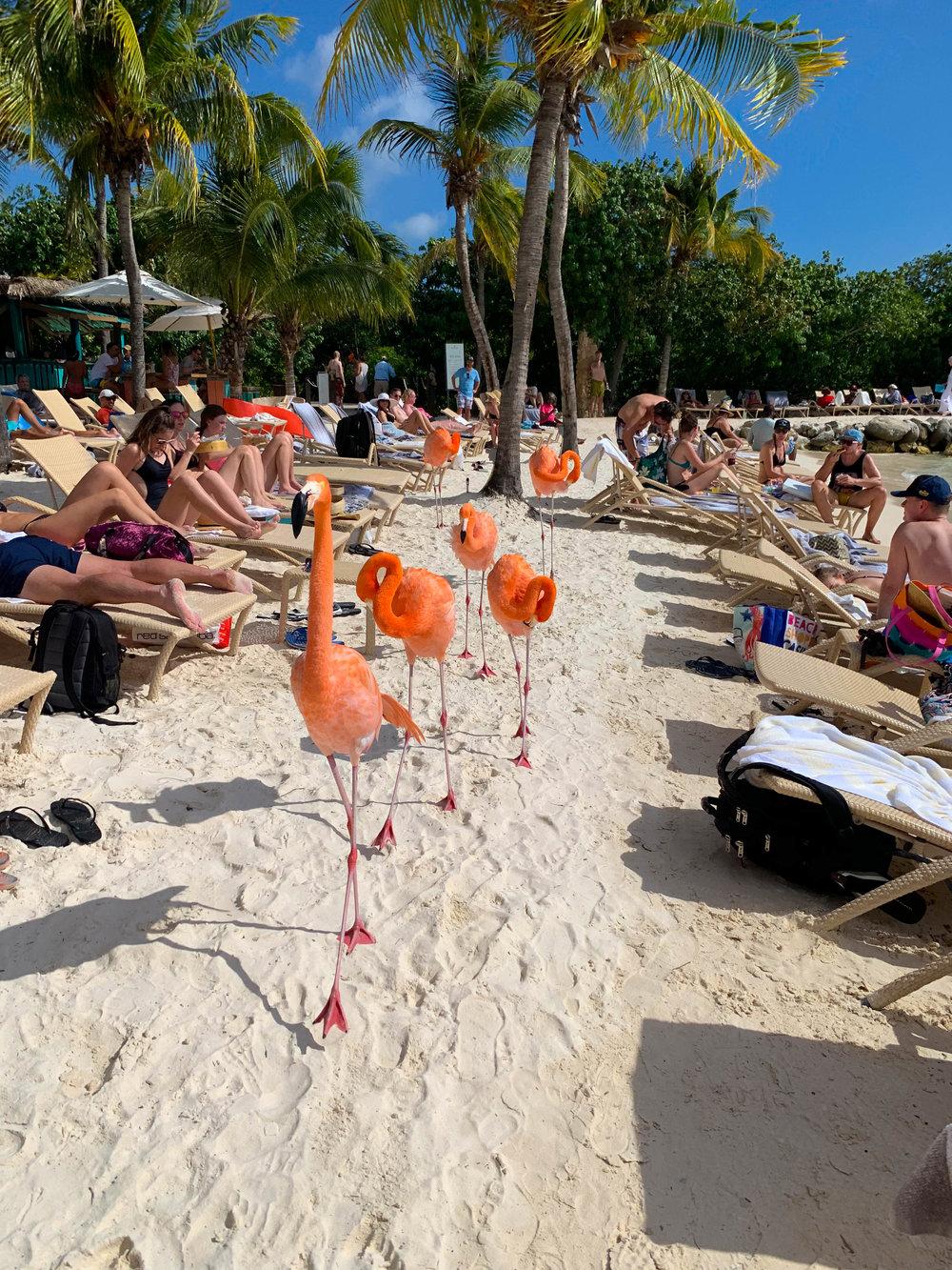 Aruba-Flamingo-Island-36.jpg