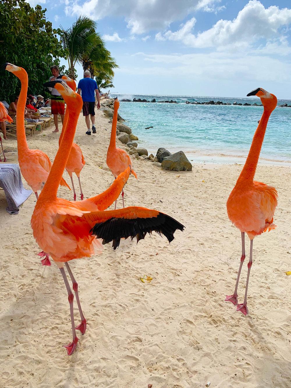 Aruba-Flamingo-Island-27.jpg