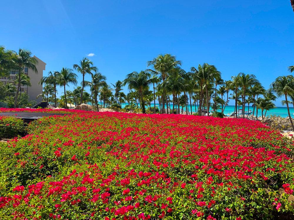 Aruba-Hyatt-Regency-30.jpg