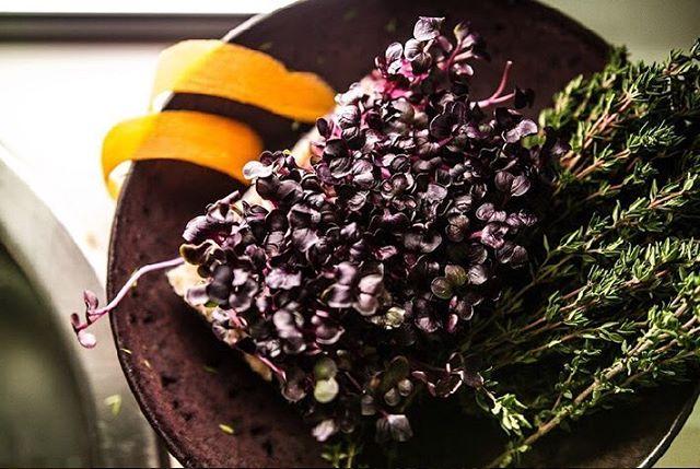 Kresse 🌱 - das perfekte Topping für Salate und Brote!  Das kleine Wunderblatt macht nicht nur satt sondern unterstützt unsere Gesundheit.  Neben den Vitaminen A, C und den B-Vitaminen, stecken auch wertvolle Mineralien in der Kresse, etwa Kalium, Calcium, Magnesium und auch Eisen.  Jede Menge davon gibt's bei uns im Knolle & Kohl! #kommtrum  #foodforthought #plantbased #westend #livemusic #jazzmunich #vegansinmunich #munichfood #munich #münchen #popupbar #popup #pintxos #jazz #saisonal #foodlove #foodie #food #veganism #health #mindful #plantlove #superfood