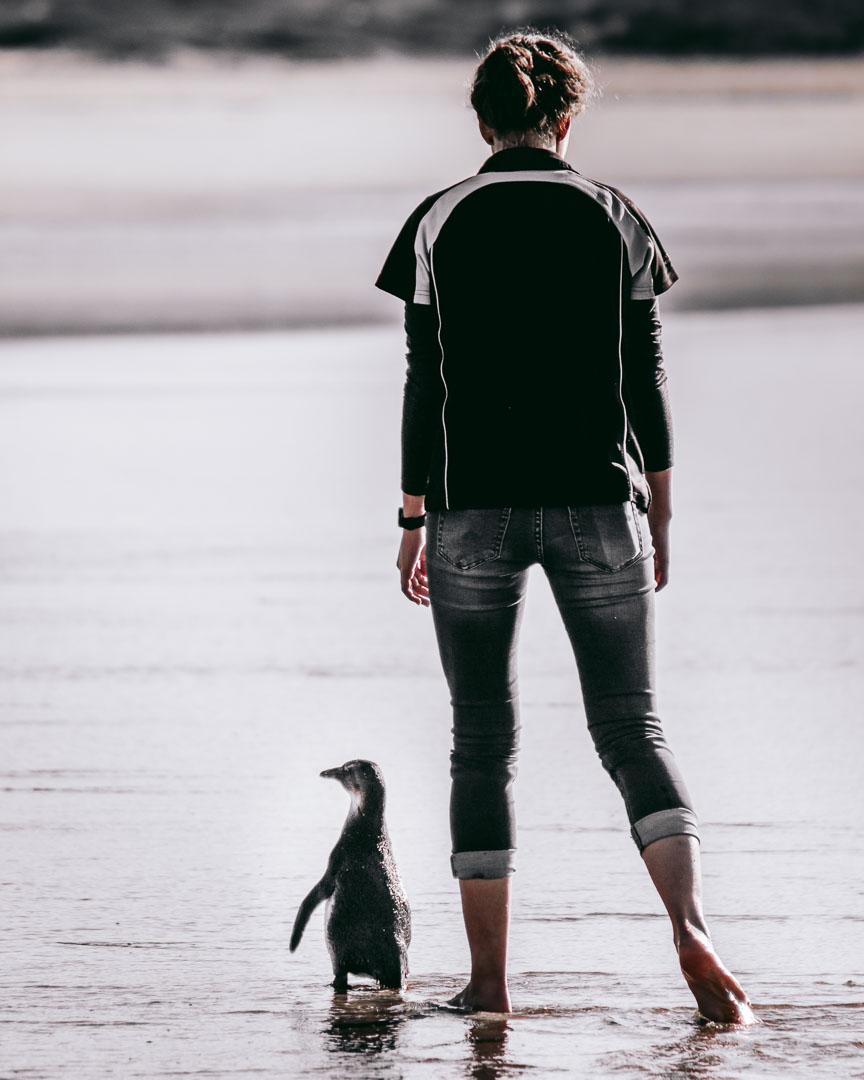 Penguins-13.jpg