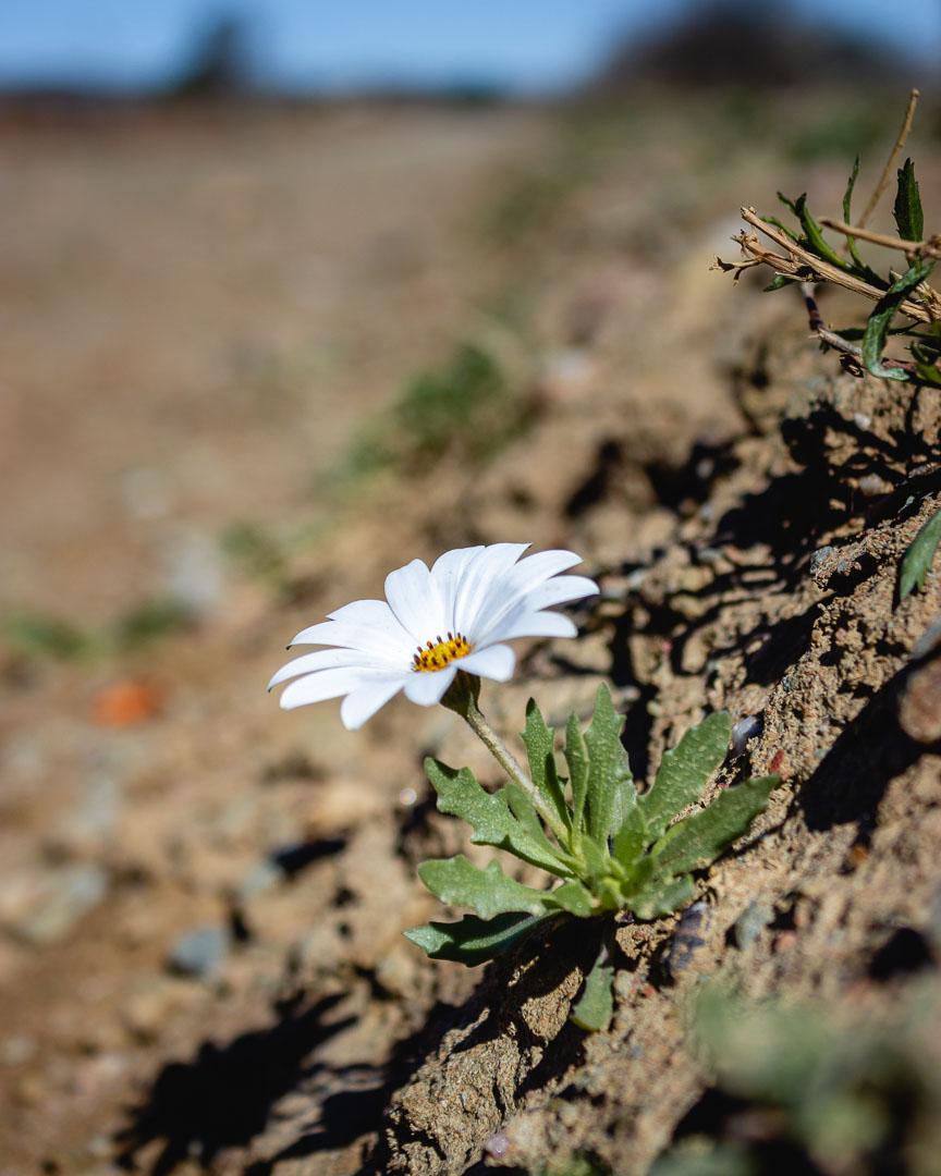 De rust flower.jpg