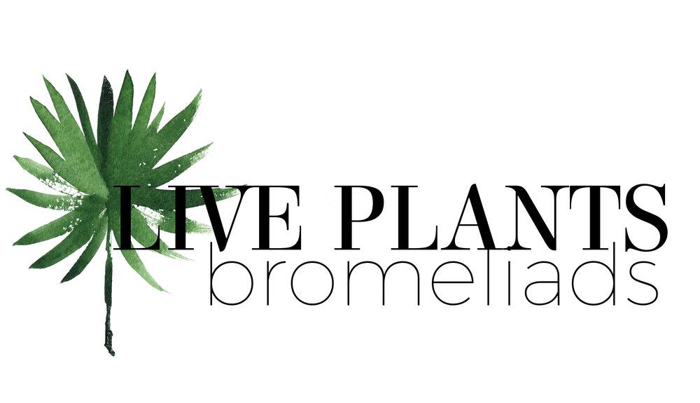 littlelogosliveplantsbromeliads.jpg