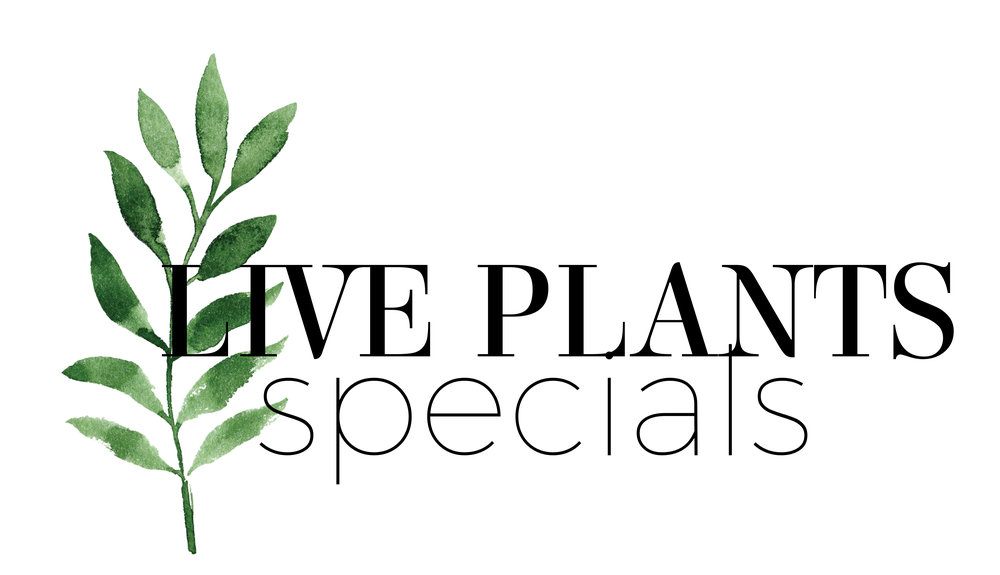 littlelogosliveplantsspecials.jpg
