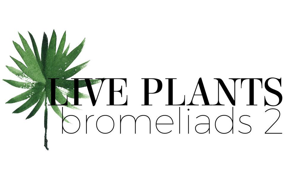liveplantsbromeliad2logo.jpg