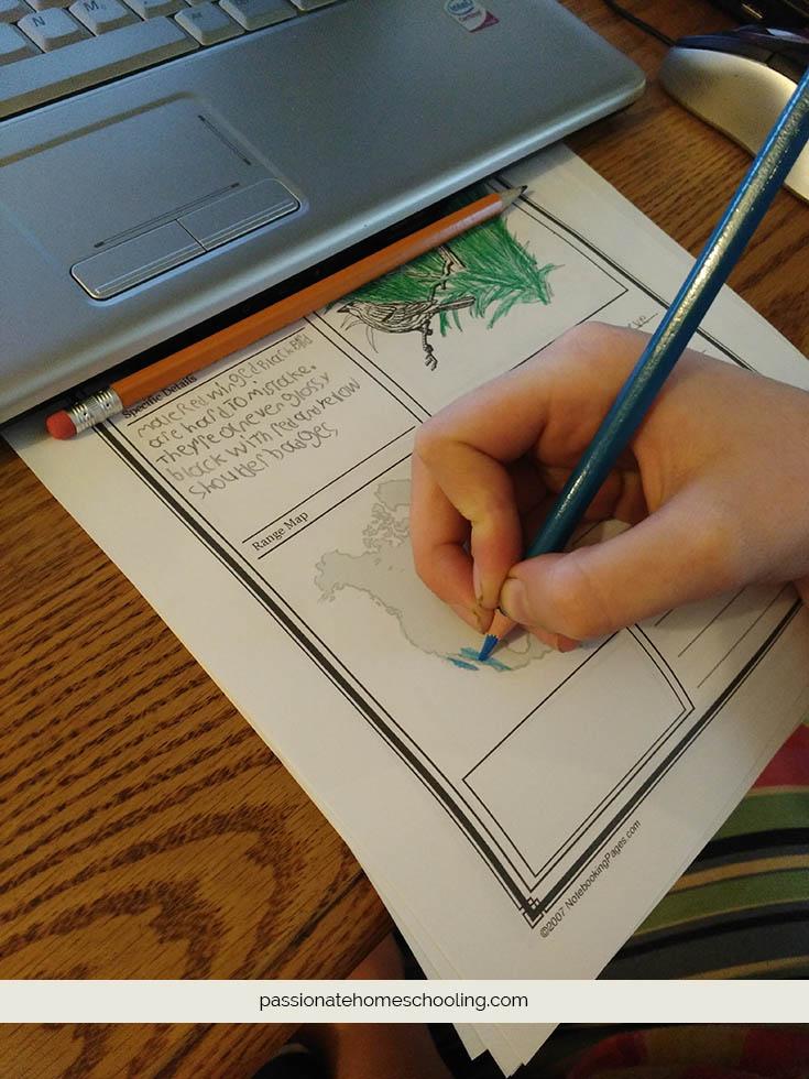 bird notebook page