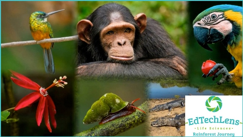 Rainforest Journey is an easy to use life science supplement program. It uses gorgeous photos of rainforest life, to introduce children to this magical world.