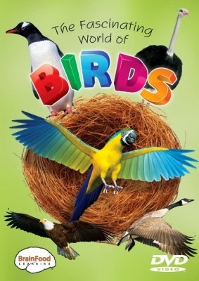 The Fascinating World Of Birds