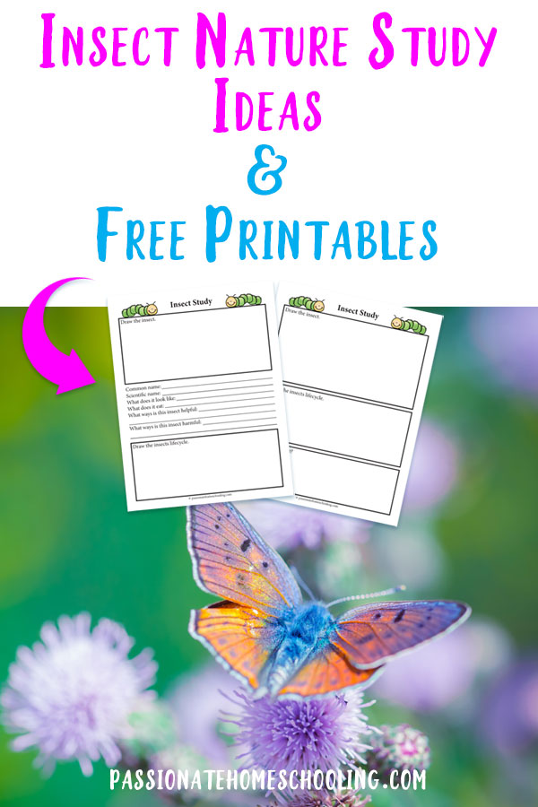Fun ideas for learning about insects in your nature study this summer! Free printable notebooking pages to make your study easy and stress free.  #naturestudy #homeschooling #printables #passionatehomeschooling