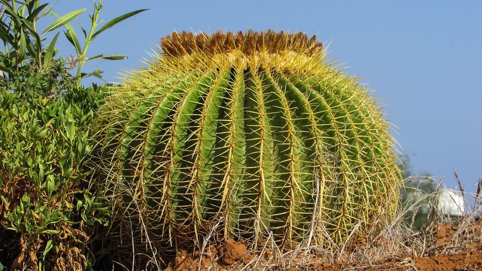 cactus-1632142_960_720.jpg