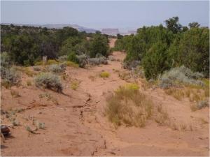 "Desert soil near Moab, Utah–Taken from the presentation ""Utah BLM's Role in Colorado's Early Snowmelt"" by SUWA"