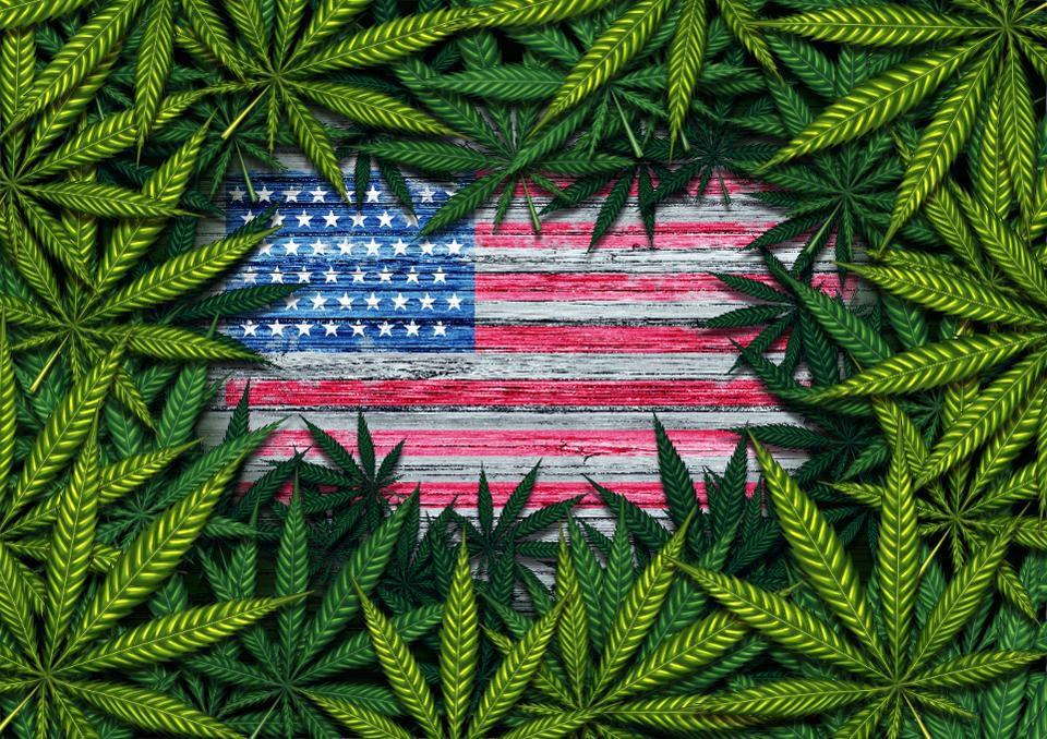 ag2 cannabis .jpg