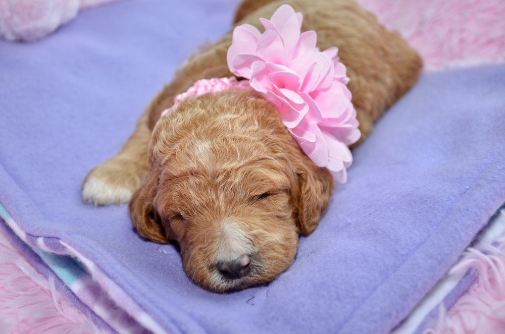 Brianna Girl Lt Pink.jpeg
