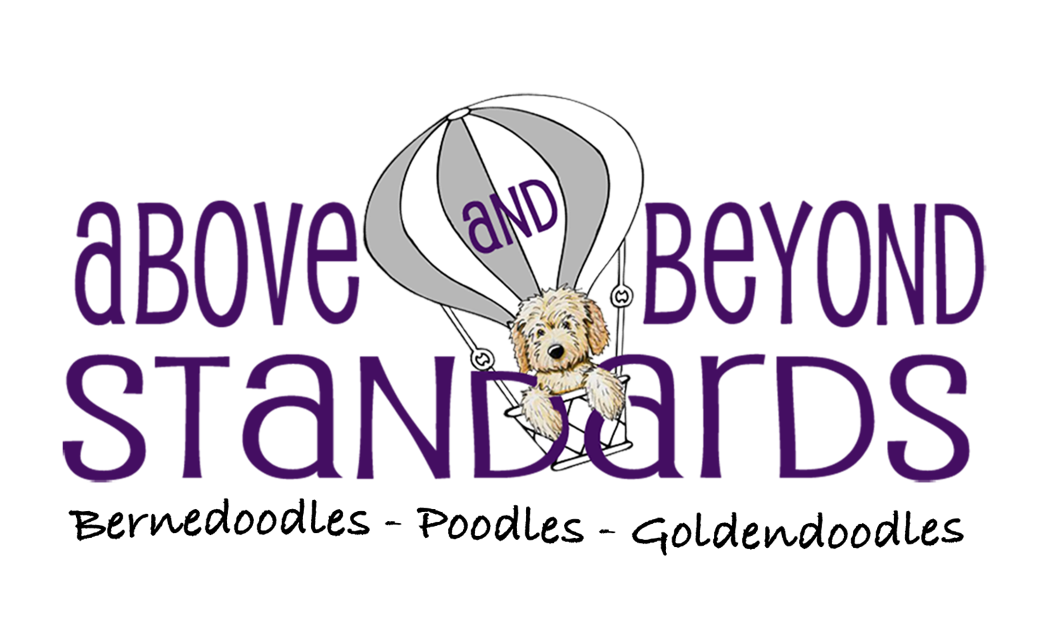 English Goldendoodle, Bernedoodle, and AKC Standard Poodle Puppies in North Carolina by Above and Beyond Standards