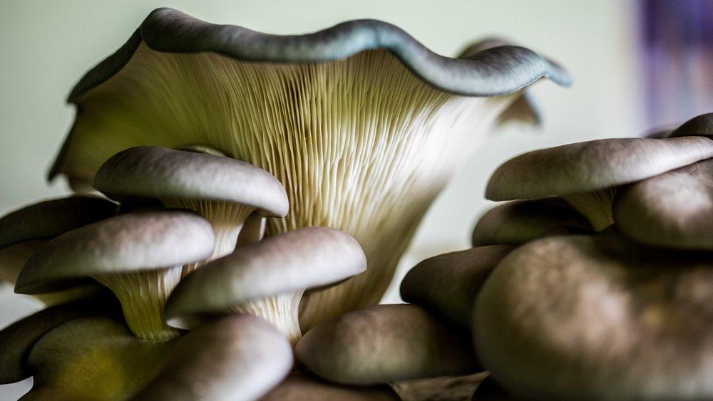 The secret life of mushrooms.jpg