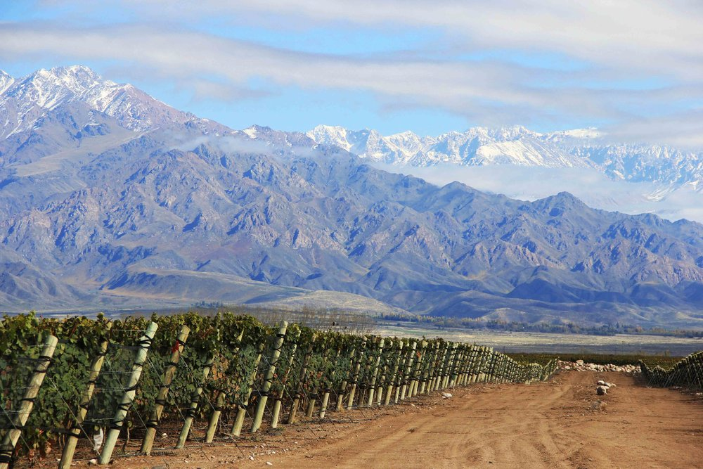 Zuccardi Vineyards - Valle de Uco, Argentina