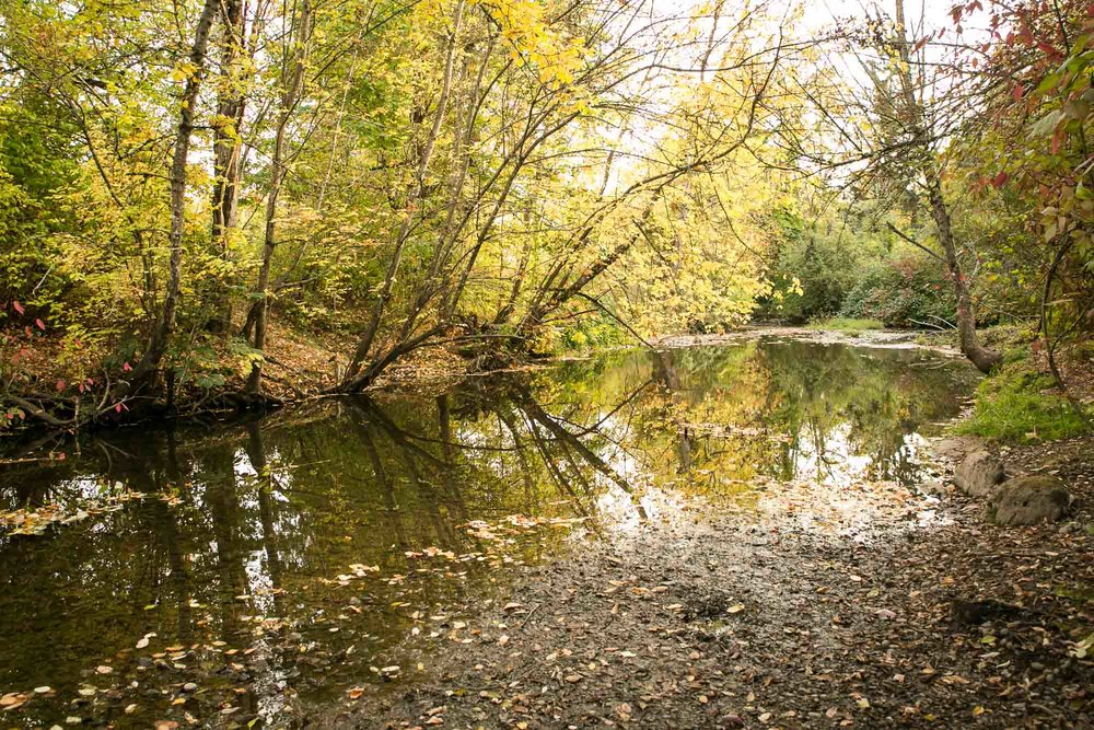 visit-sellwood-moreland-business-alliance_johnson-creek-park-3.jpg
