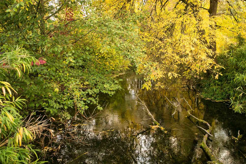 visit-sellwood-moreland-business-alliance_johnson-creek-park.jpg
