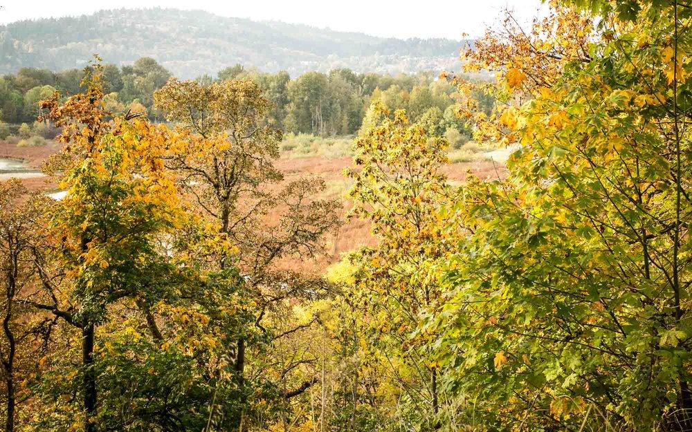 visit-sellwood-moreland-business-alliance_oaks-bottom-3.jpg