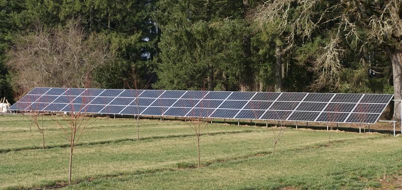 11.5 kW on a peach farm in Cornelius
