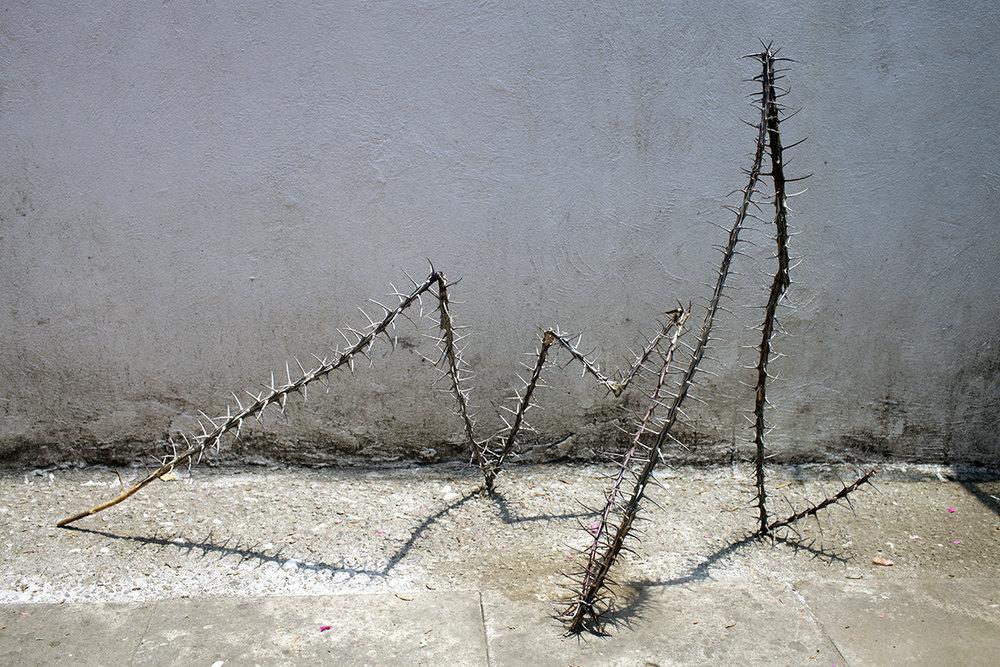Serpiente de ocotillo.jpg