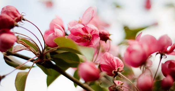Noosa-celebrant-flowers