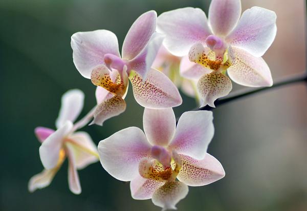noosa-celebrant-funeral_flower.jpg