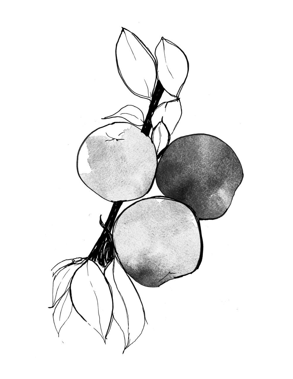 Nectarine A.jpg