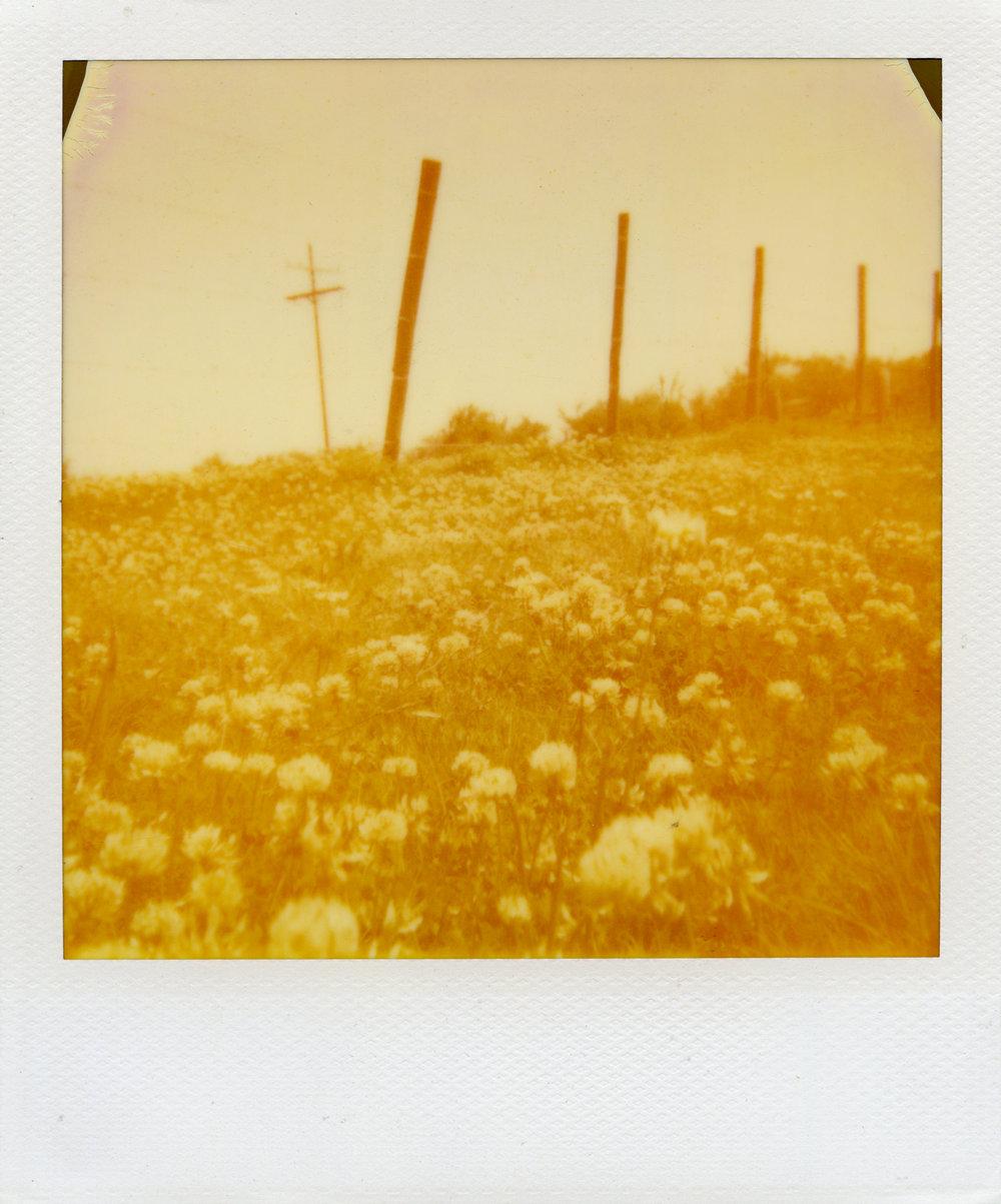 SG polaroids004.jpg