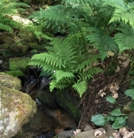 The ferns are lush