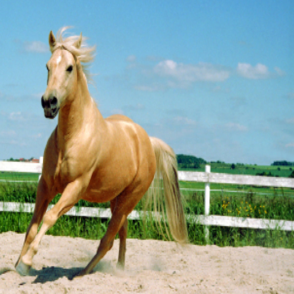 Teile vonCundwells Vermögen:100 Pferde,3 Hektar Farm und30 Hektar Zucht. -