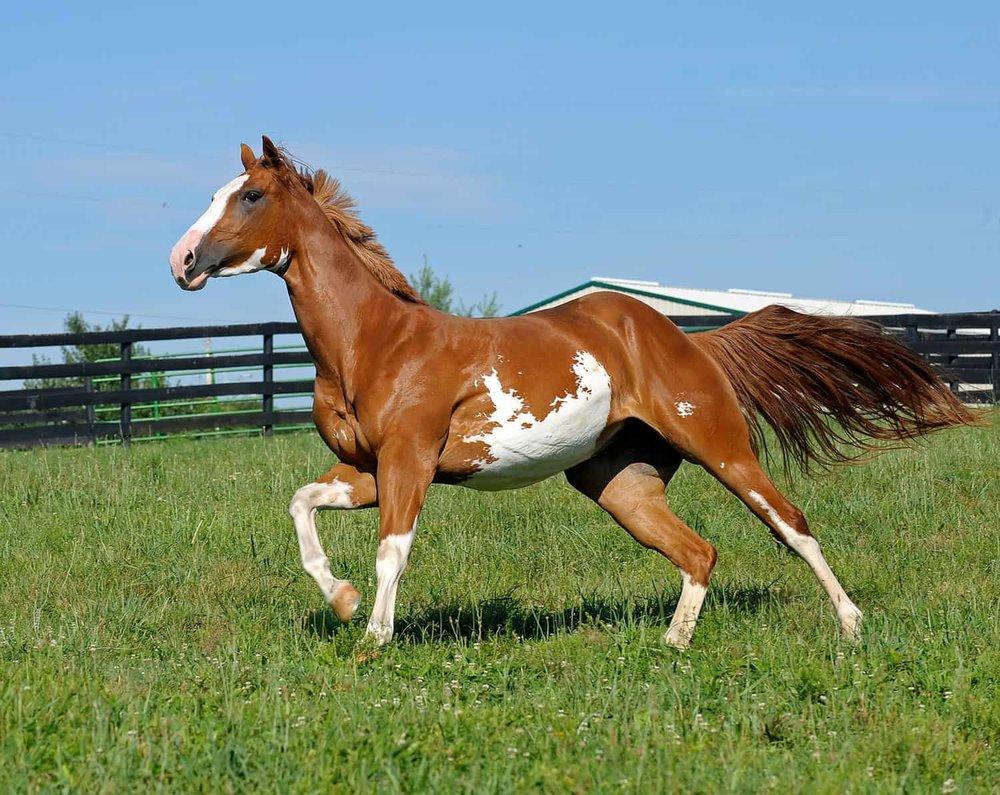 Bailey brachte Die Pferdenarrin Carole Karstenson schon nach 2 Monaten dazu ihm $15.000 für einen Pferdedeal zu 'leihen'. -