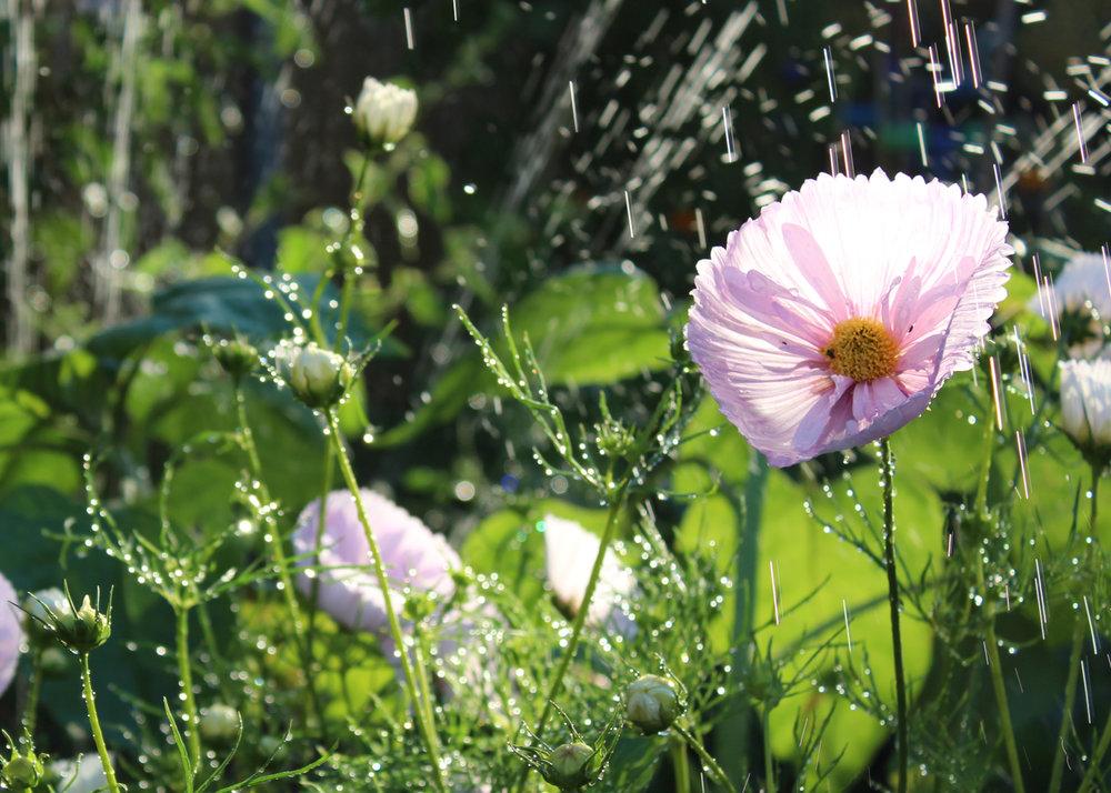 Flower Cutting Garden 2018.jpg