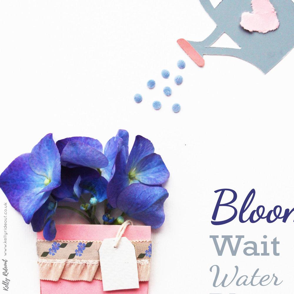 Plant Water Wait Bloom