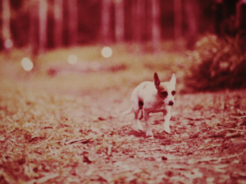 Spotty dog!