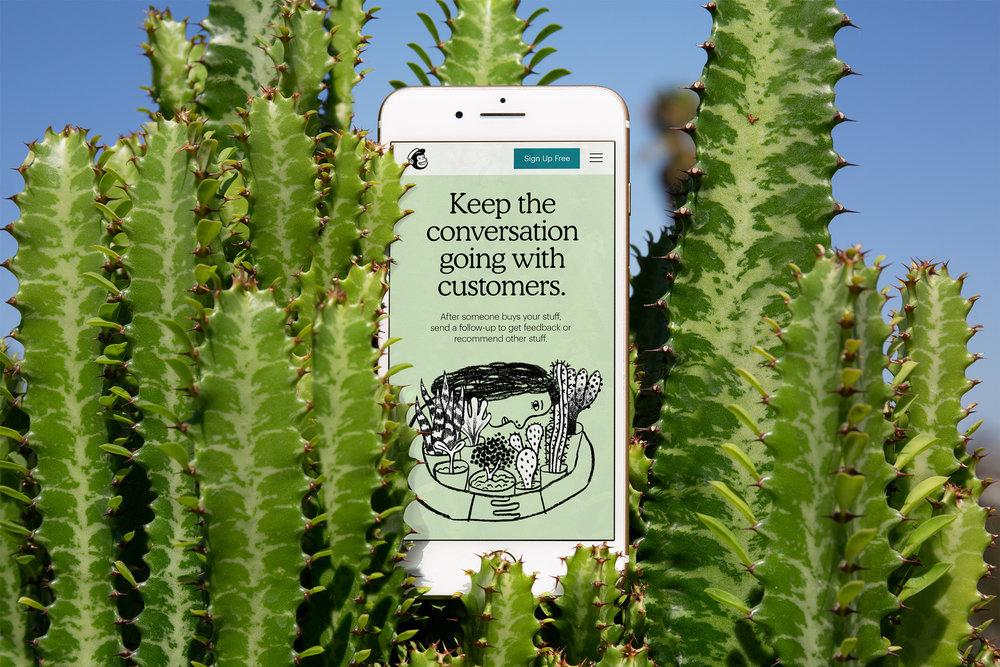 mailchimp_2018_website_cactus.jpg