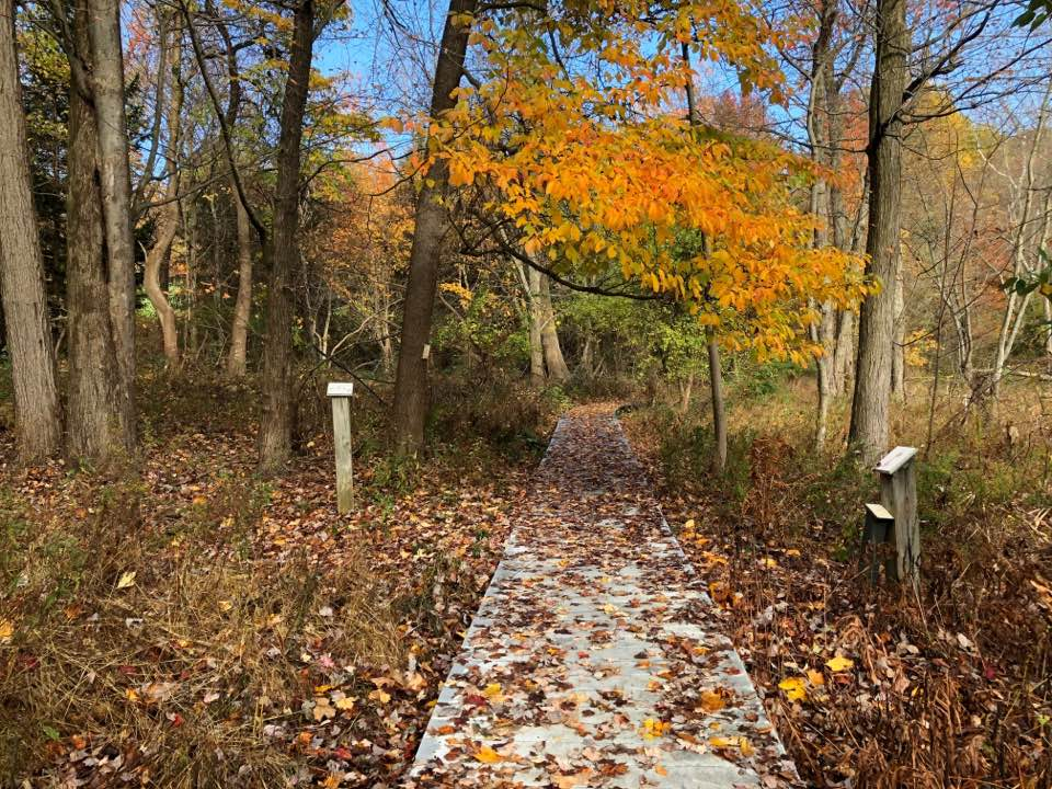 Fall-Leaves-Jane-Arboretum.jpg
