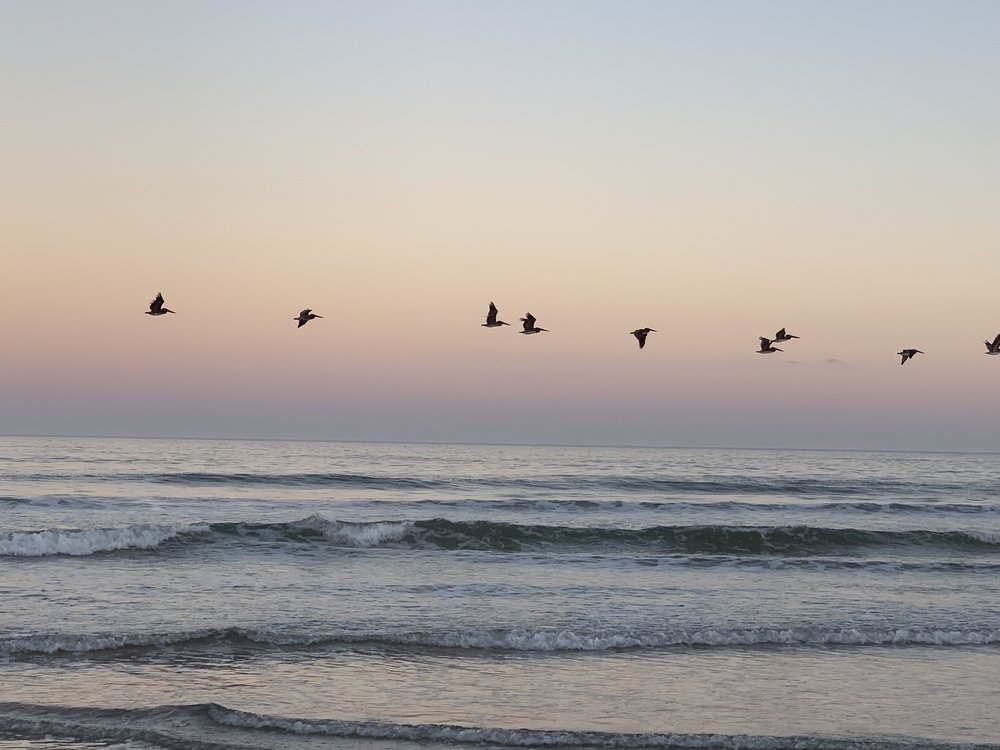 Pelicans - on the beach at sunset. The water tends to be too cold to get in, but the wildlife watching is great!