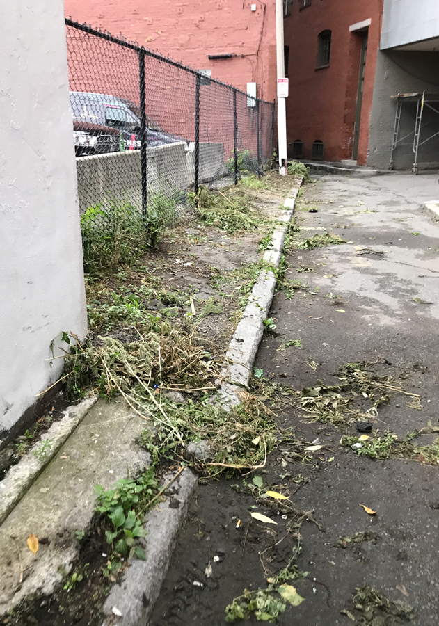 city is not caring for the grounds at cutillo park, image shows overgrown grounds