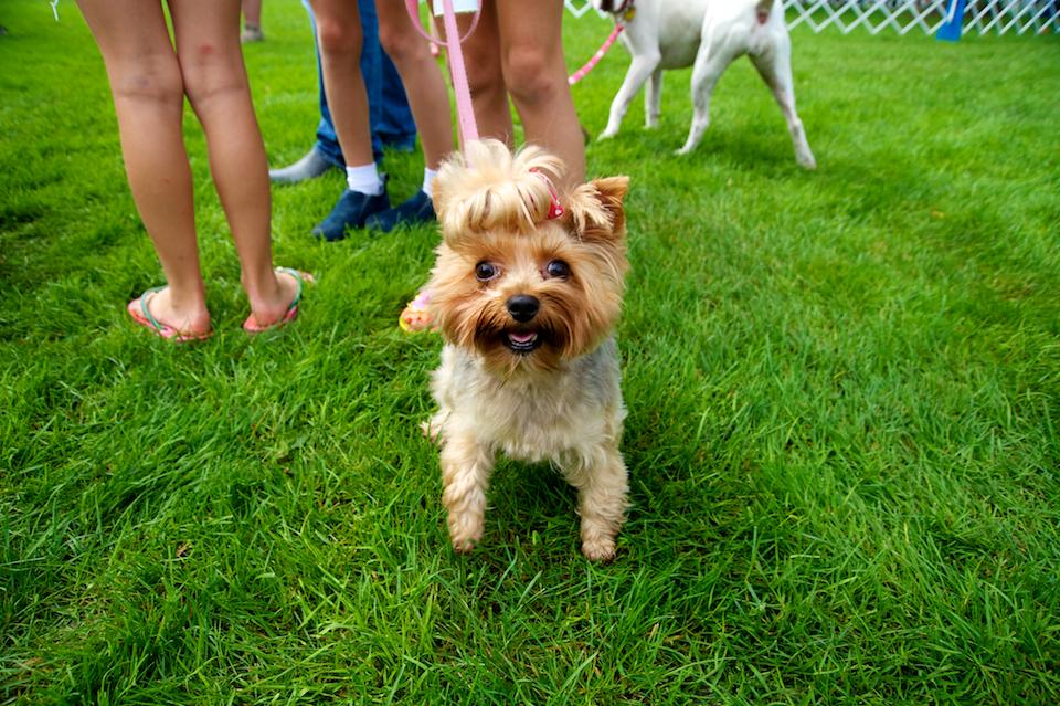 20110925_greendog_059.jpg