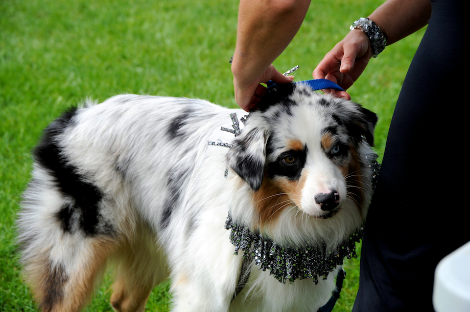 20110925_greendog_150.jpg