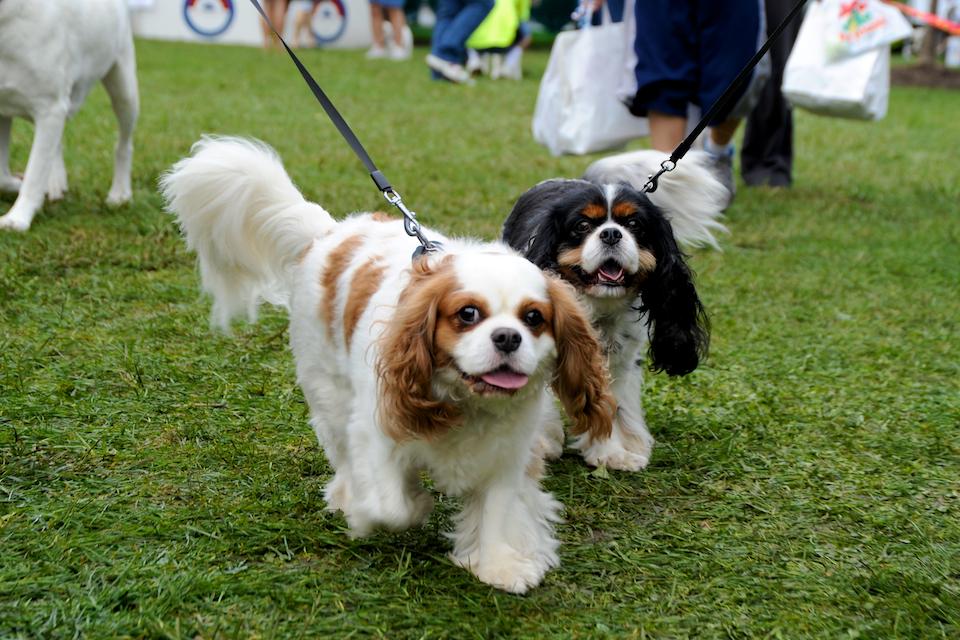 20110925_greendog_317.jpg