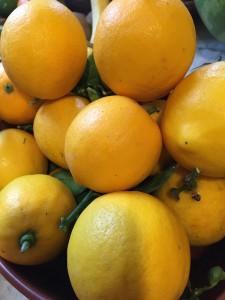 IMG_lemons 7661