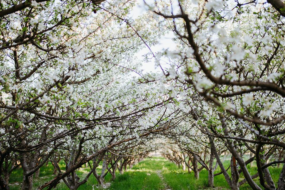 Spring Blossom Sessions: ShaiLynn photo + Film21.jpg