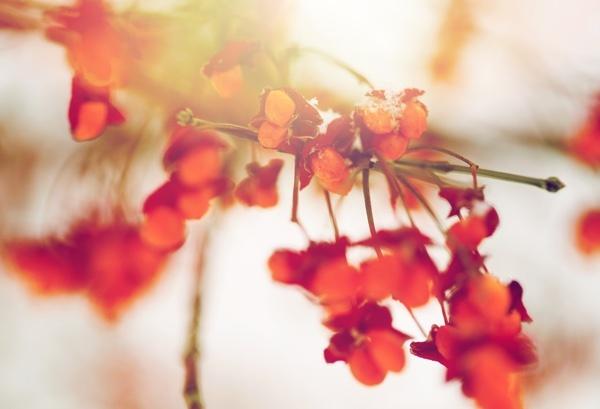 red_berries_and_leaves.jpg