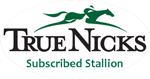 Bucchero Stallion True Nicks