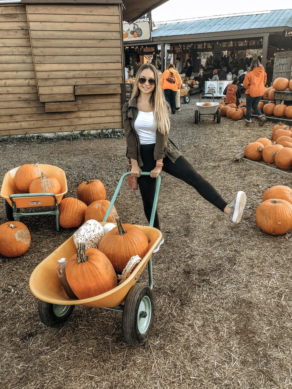 Pumpkin 2 .JPG