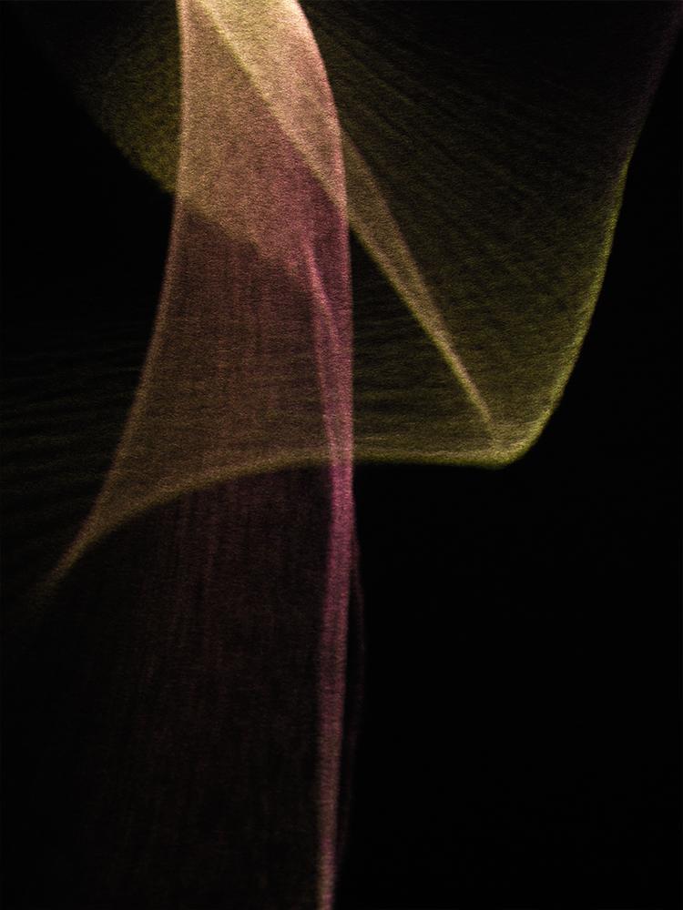 Elias Wessel   Liebst #5 , 2016  Color Photograph  Various Dimensions