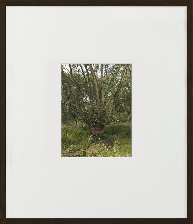 Elias Wessel  Nichts Gutes  (Vanitas), 2015  Color Photograph 70,5 x 60,6 cm (framed)