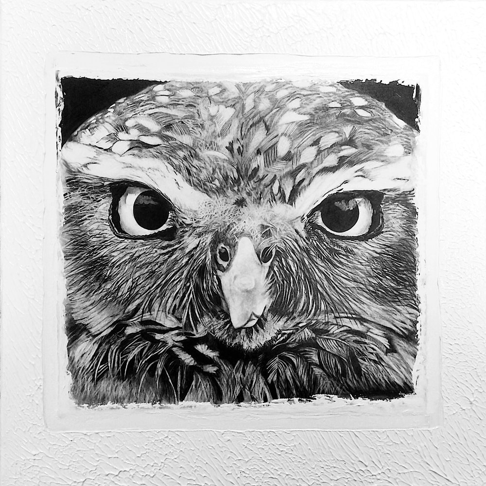 - 'Owl'90 x 90cmGraphite on paper, adhered to painted canvas and sealed with a gel coating. Ready to hang.Also available as a print$395ENQUIRE